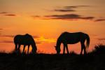 camargue_horse_workshop_france_2018_22