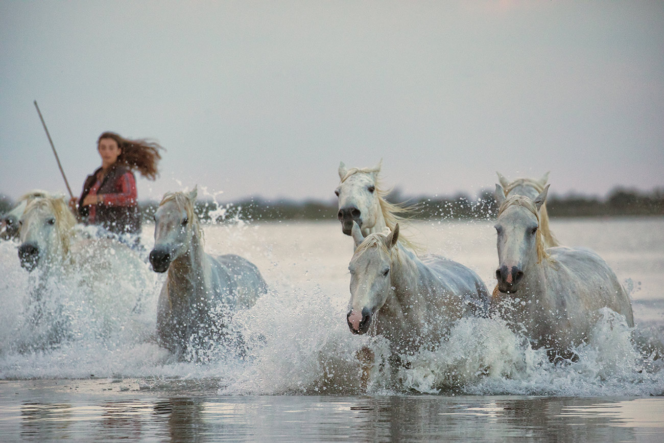 camargue_horse_workshop_france_2018_24