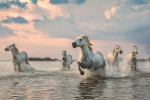 camargue_horse_workshop_france_2018_25