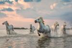 camargue_horse_workshop_france_2018_25