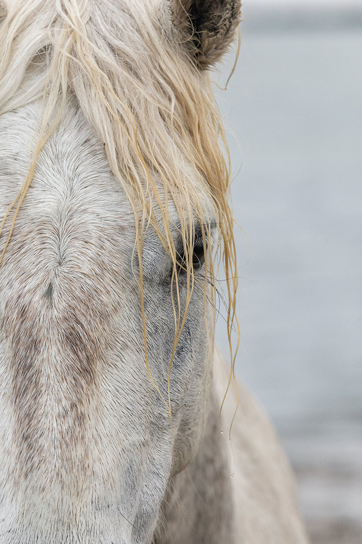 camargue_horse_workshop_france_2018_26
