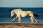 camargue_horse_workshop_france_2018_32