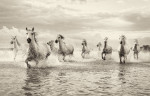 camargue_horse_workshop_france_2018_36
