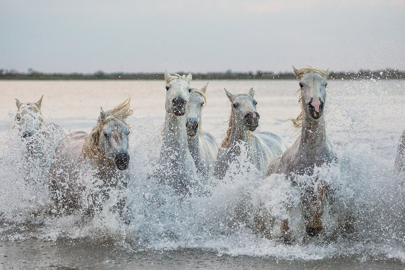 camargue_horse_workshop_france_2018_38