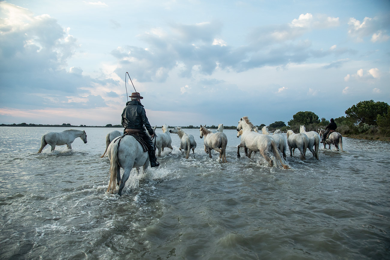 camargue_horse_workshop_france_2018_39