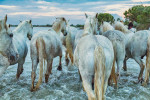 camargue_horse_workshop_france_2018_43