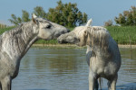 camargue_horse_workshop_france_2018_44
