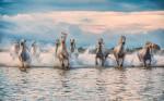camargue_horse_workshop_france_2018_45