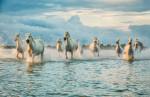 camargue_horse_workshop_france_2018_50
