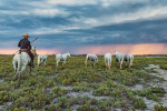 camargue_horse_workshop_france_2018_53