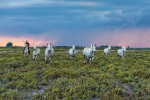 camargue_horse_workshop_france_2018_54