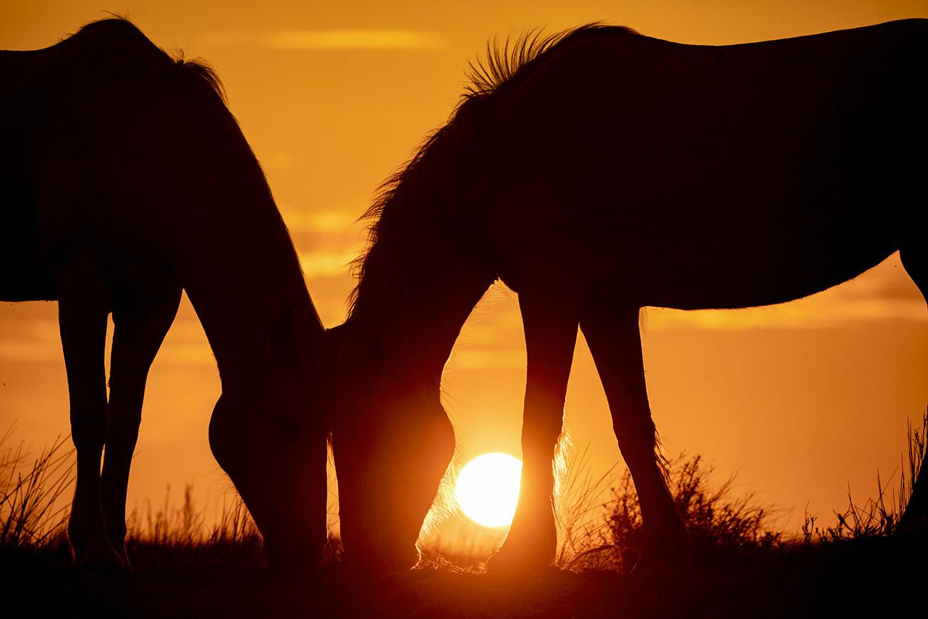 camargue_horse_workshop_france_2018_57
