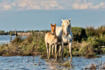 camargue_horse_workshop_france_2018_59
