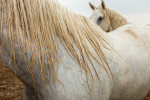 camargue_horse_workshop_france_2018_67