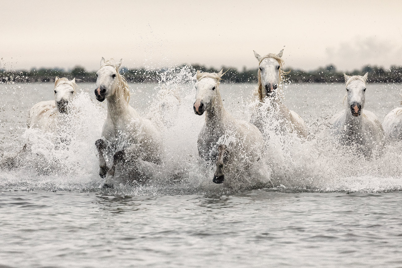 camargue_horse_workshop_france_2018_69