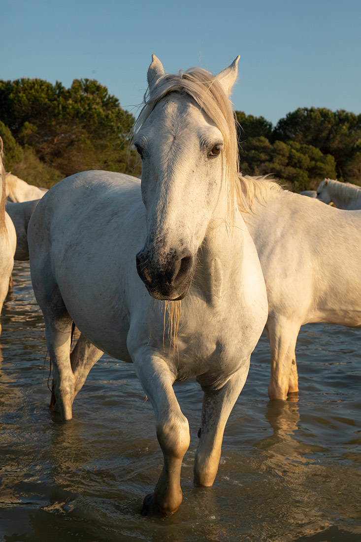 camargue_horse_workshop_france_2018_71