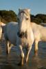 camargue_horse_workshop_france_2018_71