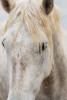 camargue_horse_workshop_france_2018_74