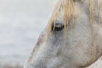 camargue_horse_workshop_france_2018_76