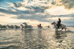 camargue_horse_workshop_france_2018_84