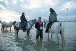 camargue_horse_workshop_france_2018_85