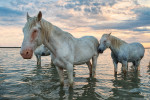 camargue_horse_workshop_france_2018_88