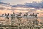 camargue_horses_135_running