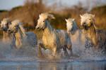 camargue_horses_first_trip_1