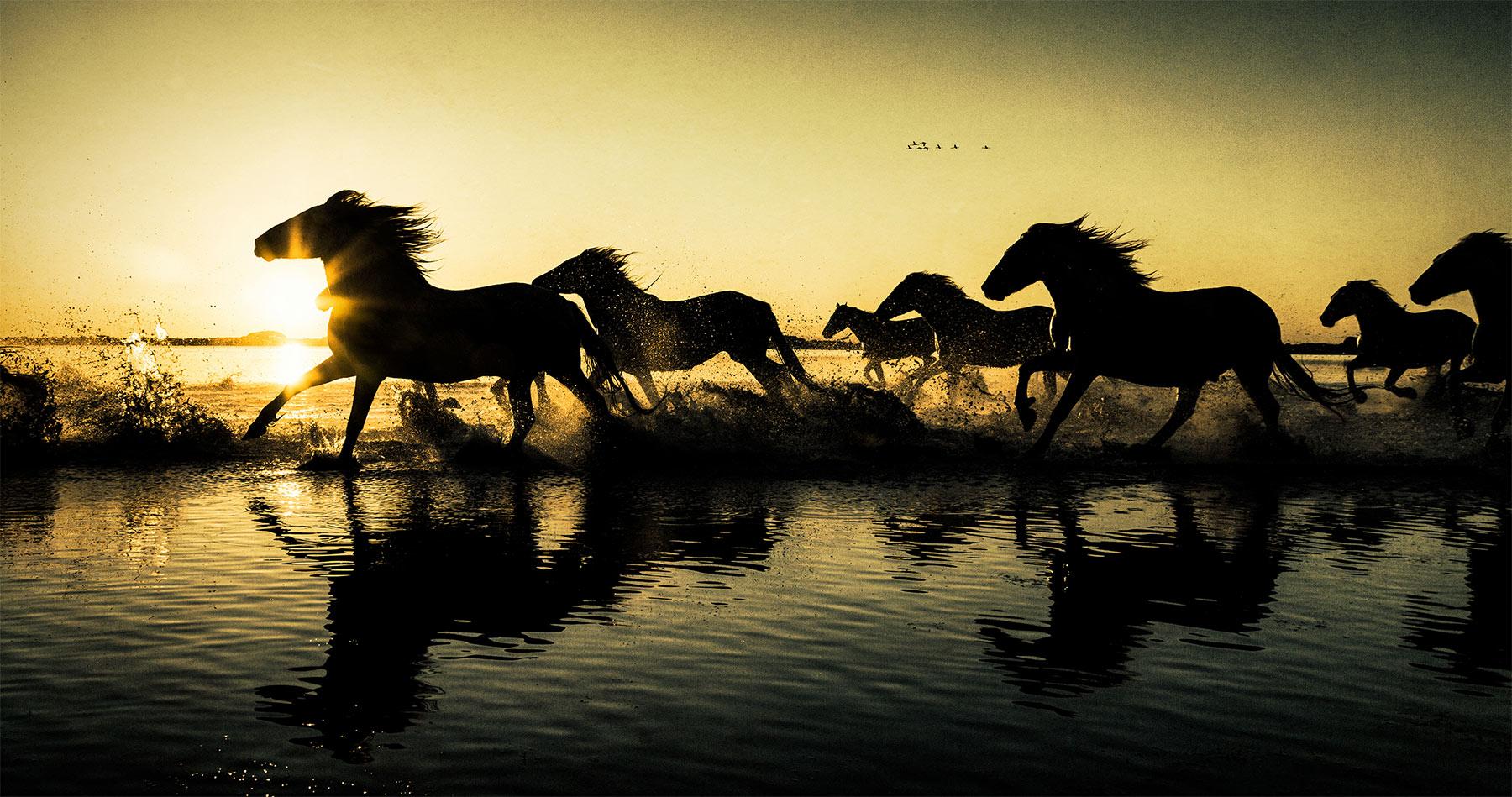 camargue_horses_silhouette_intro