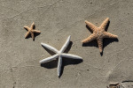 Sea Stars on Marthas Vineyard