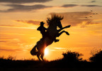 Cowgirl and rearing horse at sunrise