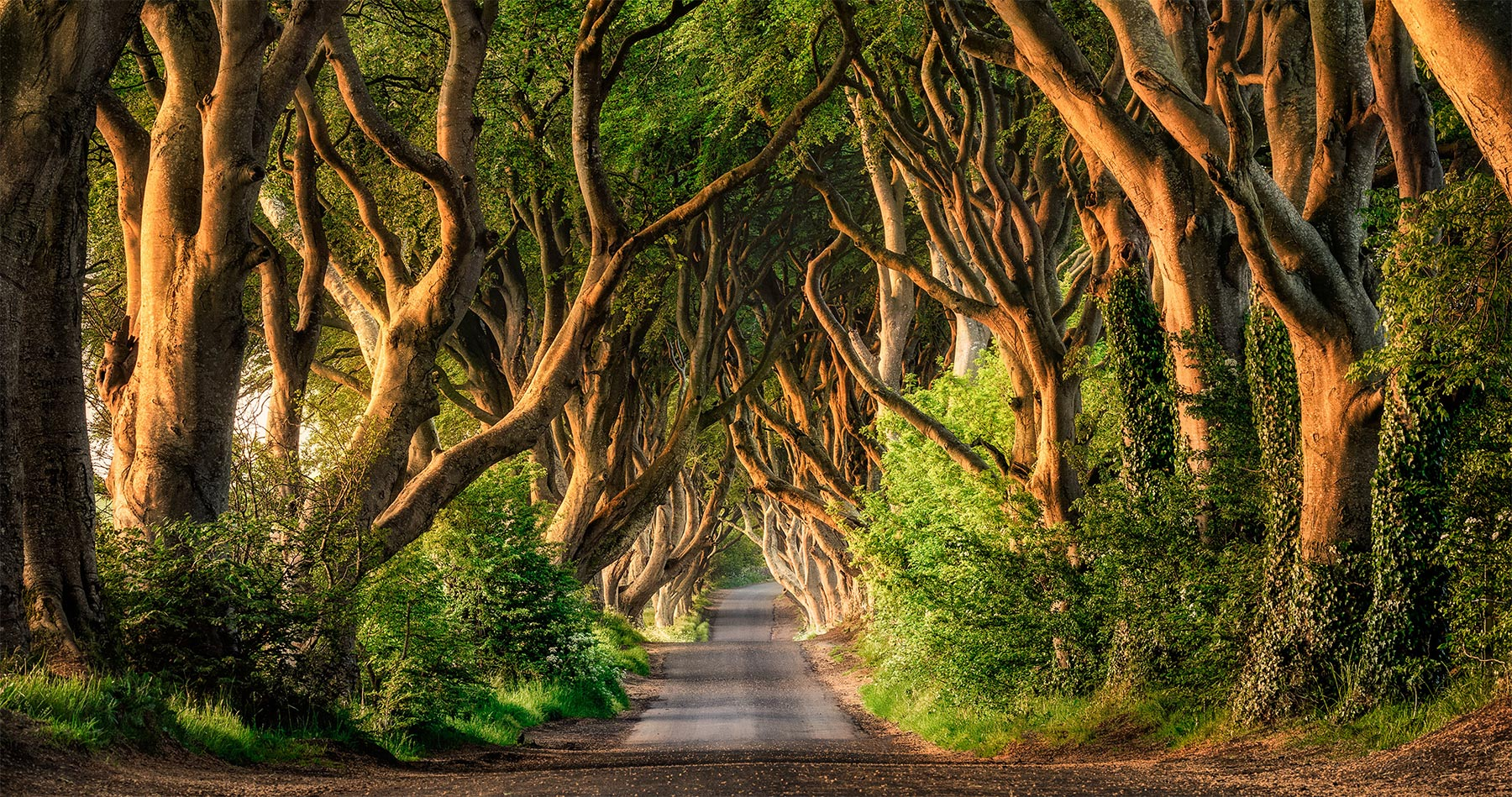 dark_hedges_ireland_intro