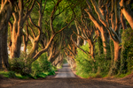 The stunning Dark Hedges of northern Ireland