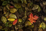 fall_color_01