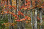 fall_color_04