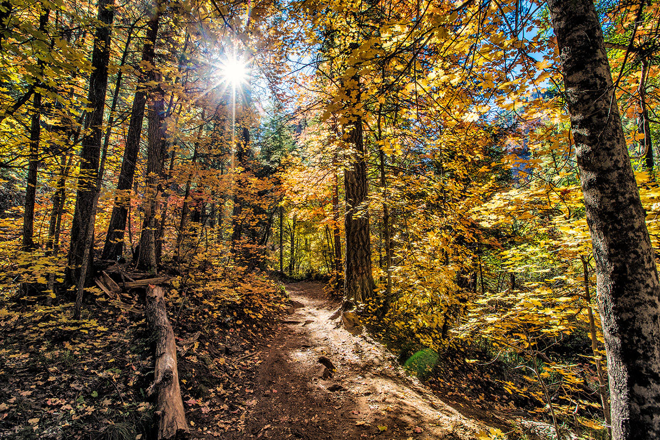 fall_color_05