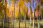 fall_color_06