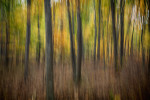 fall_color_07