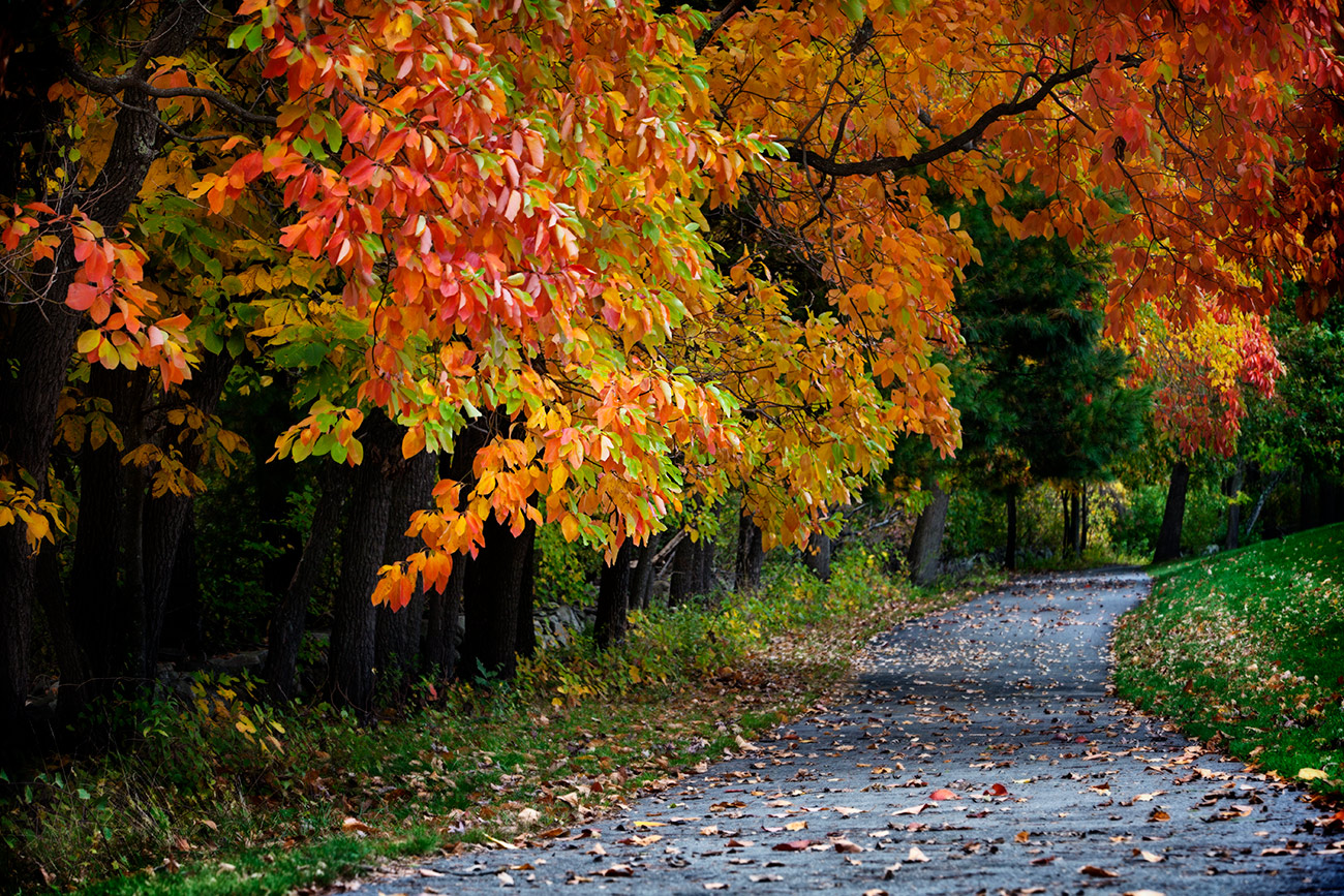 fall_color_14