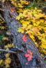 fall_color_22