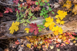 fall_color_23