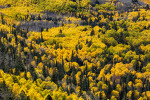 fall_color_24