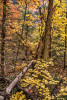 fall_color_25