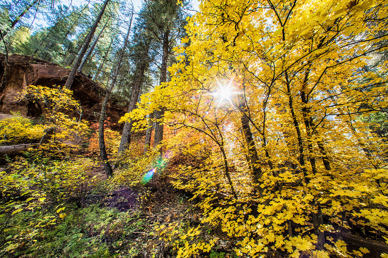 fall_color_260