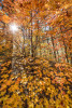 fall_color_27