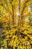fall_color_28