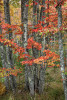 fall_color_33