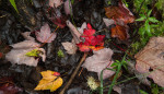 fall_color_42