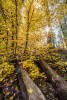 fall_color_45
