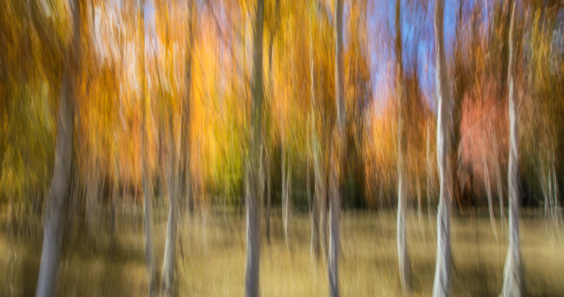 fall_color_grand_canyon_aspens